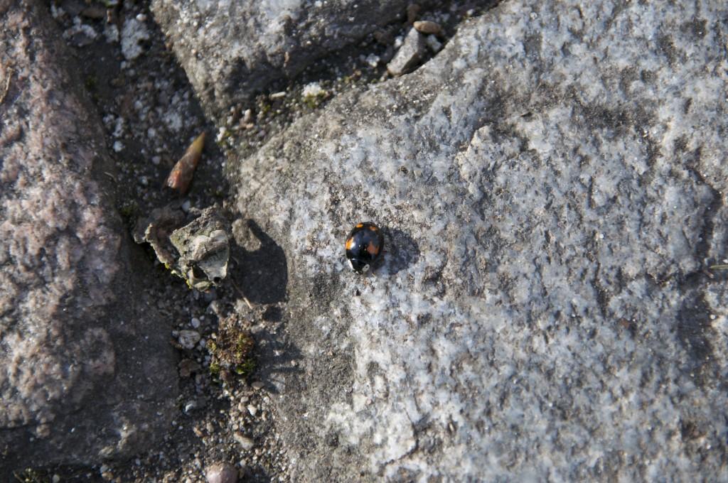 Käfer (Makro)