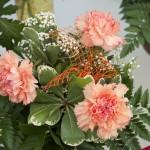 Ein Strauß rosa Nelken