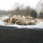 Holz (Makro)