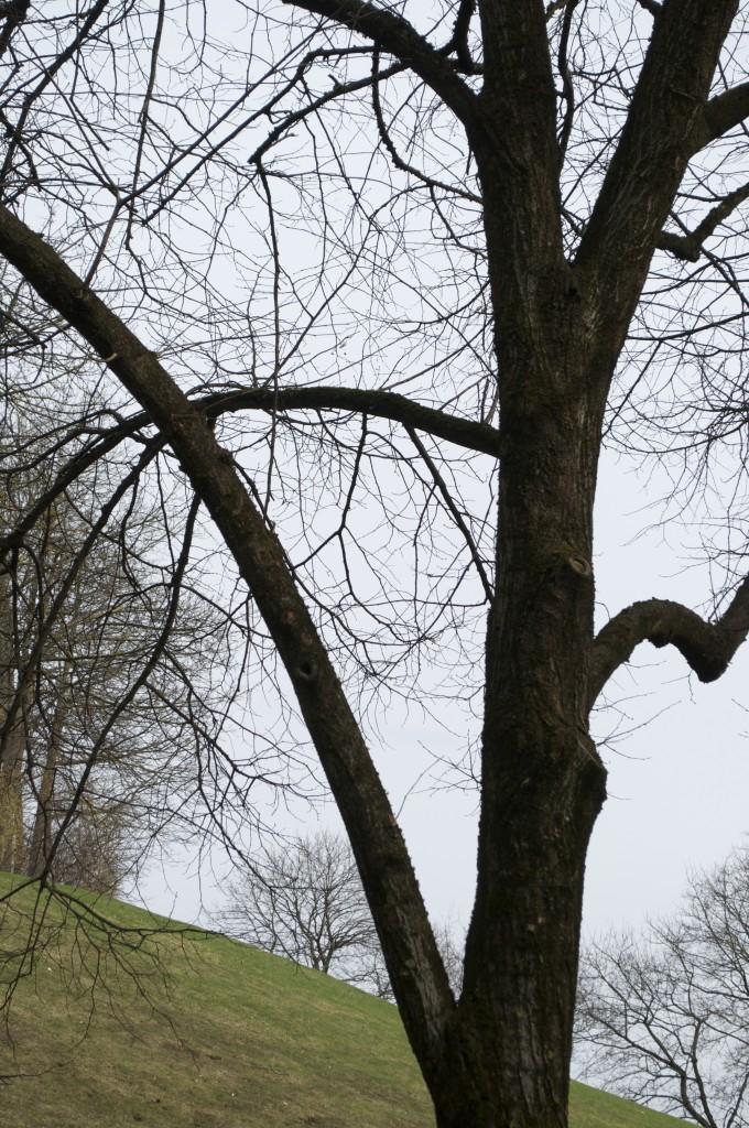 Dreieck Baum