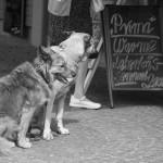 Hungrige Hunde !